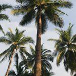 green-palm-tree-under-blue-sky-3687697